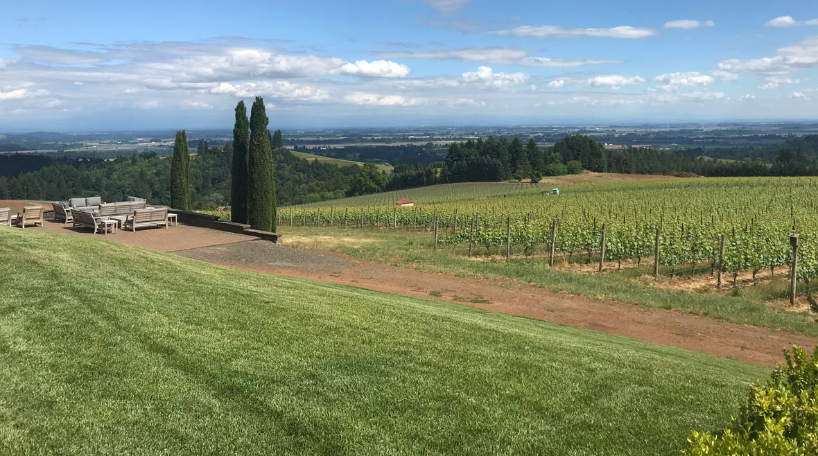 view of Black Walnut Vineyards in sunshine overlooking Willamette Valley
